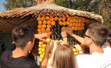 Mandarina - od ideje do proizvoda